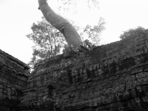 Tree eats temple - much more of this...