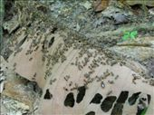 millions of ants in the jungle: by noflyzone, Views[245]