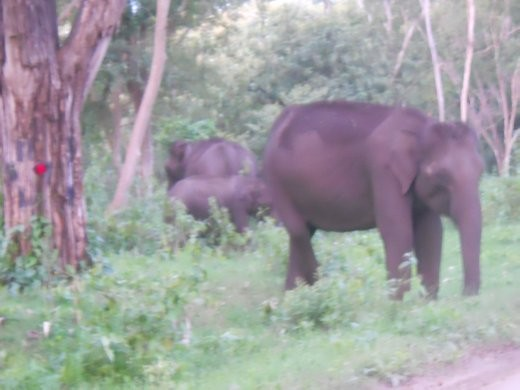 lephant