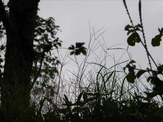 the grass prespective