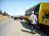 Right past our tour bus. These things can run at 30 miles an hour!: by nomad_kiwis, Views[378]