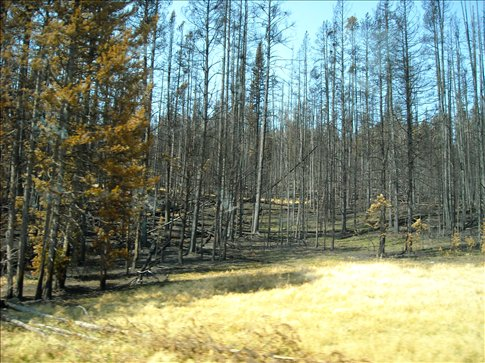 Fires are left to burn themselves out when they start naturally here.