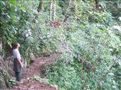 and beautiful, very like NZ bush: by nomad_kiwis, Views[295]