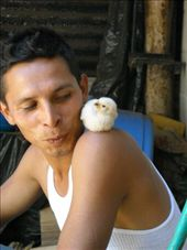 Walter with Pollito: by nomad_kiwis, Views[434]