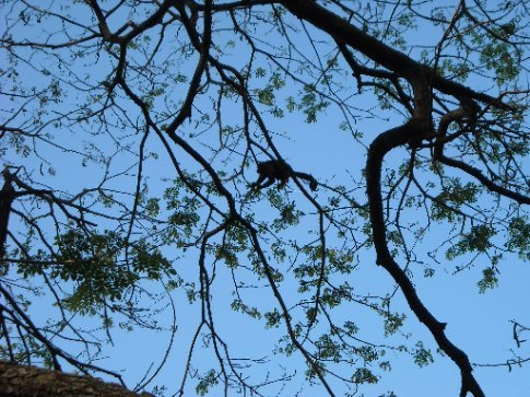 monkeys in the trees above us