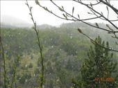starting to snow: by nomad_kiwis, Views[176]