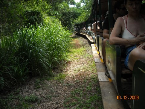 free train around the park