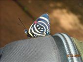 by nomad_kiwis, Views[260]