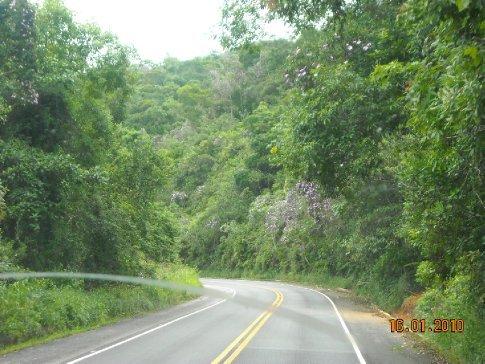 lush vegetation on the coast road