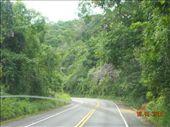 lush vegetation on the coast road: by nomad_kiwis, Views[561]