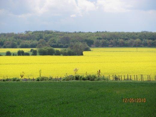 fields of rape