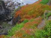 amazing colours at Lizard Point: by nomad_kiwis, Views[259]