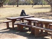 second one - a baboon decided to join us for lunch: by nomad_kiwis, Views[94]