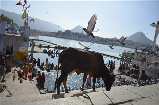 Bathing in the holy waters of Lake Pushkar to wash away Life's sins
