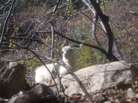 Mountain Goat's Trail to the Yunmeng Gorge