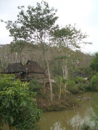 Menglun botanical garden - the rainforest area