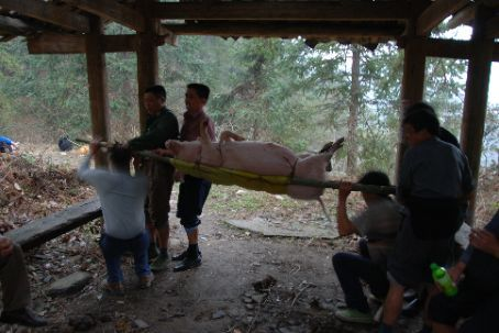 Longji rice terraces, the pig for the funeral