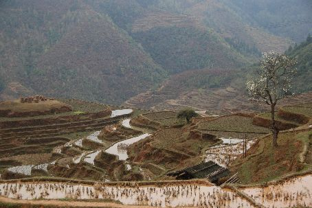 The rice terraces at the foot of Basha