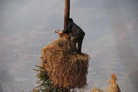 A local Xijiang farmer in the fields in the morning.