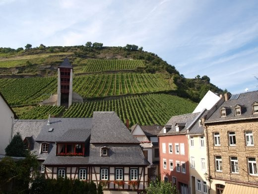 Bacharach vines