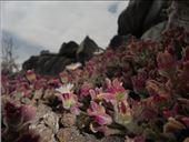 Esa flor me tiene loca: by nortina, Views[41]