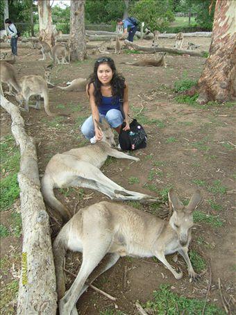 Allí estoy con los canguritos en el Lone Pine Koala Sanctuary