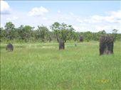 Nidos de termitas: by nortina, Views[898]