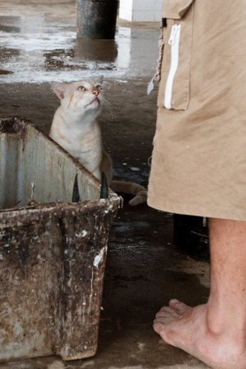 Even the smallest of animals depends on the fishing trade in Puerto Lopez.