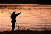 A fisherman catches small trout, lake Jindabyne.: by nsusatyo, Views[77]