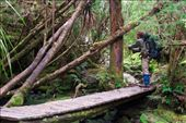This was one of the many hand made bridges for walkers along the track. This particular one was halfway up Barrons Pass and presented us with the opportunity to take a break and refresh ourselves and the water supply. The hiker in the image is George and has to be one of the fittest and kindest people I have ever met.: by oliverhiggins, Views[289]
