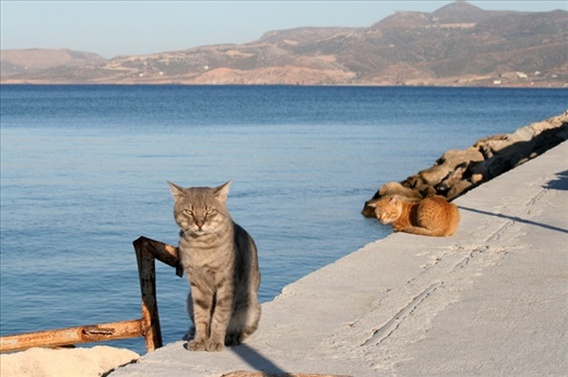 Greek cats - lazy and charming)