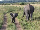Mother & baby elephant: by ontheroadandoff, Views[714]