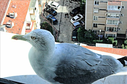 Expect a visit from a Seagull during the day,just look through your window