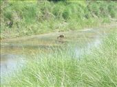Spotting Spotted Deer: by over-40, Views[517]