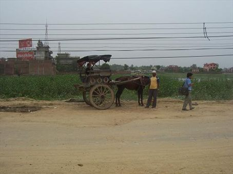 Horse and cart (if you can see it!)