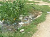 Where all good thongs aspire to go when they die - Nepalgunj thong pond.: by over-40, Views[719]