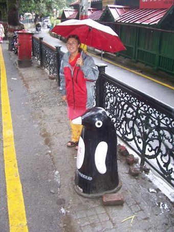 Another penguin invading India