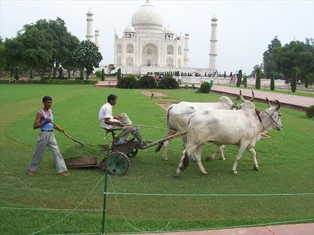 Methane-producing ride-on lawnmower. Pollution has been a problem around the Taj and polluting vehicles are banned from the area. Should these be banned also? ;-)