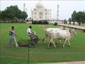 Methane-producing ride-on lawnmower. Pollution has been a problem around the Taj and polluting vehicles are banned from the area. Should these be banned also? ;-): by over-40, Views[1659]