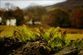 Ambleside a litlle piece of ground full of colour contrast: by overtherainbow, Views[78]
