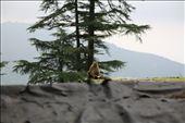 Monkey and his pineapple: by oviya, Views[97]