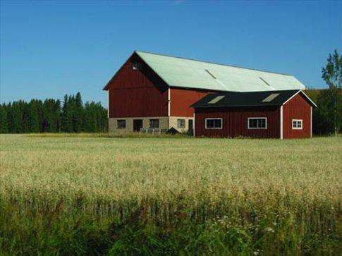 Lush grain crops near Orebro