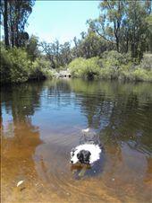 Swimming Hunt: by packda4wdletsgo, Views[109]