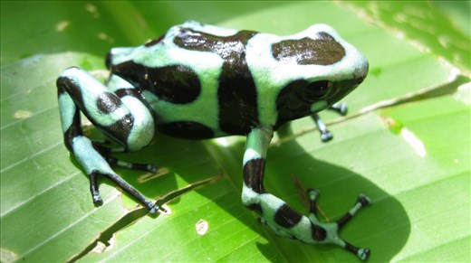 Having no military since 1948 only the Army Frog wears camouflage.