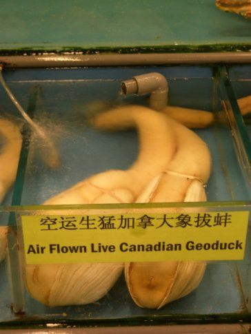 What the f*ck is a geoduck!??