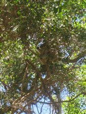 There's Koala up there somewhere!!: by partners-in-crime, Views[171]