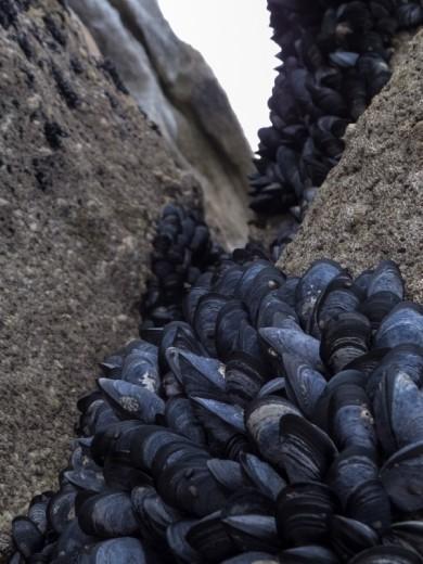 Mussels from Abel Tasmin
