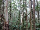 Otway Ranges: by pauline, Views[341]