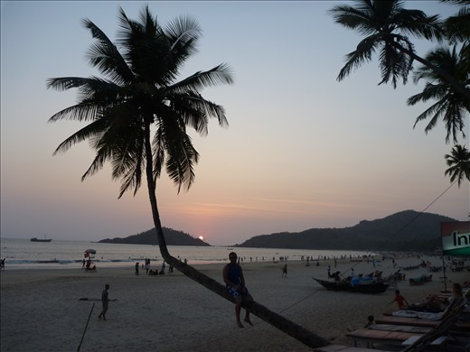 Sunset on my favourite palm tree