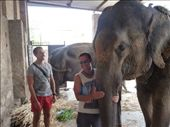 Getting up close and personal with an elephant!: by paulpiorun, Views[97]